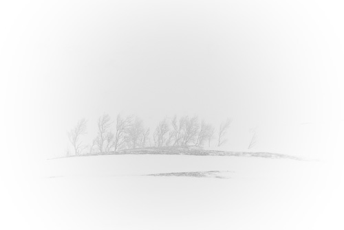 Dimma i Grandtonskalet, Vilhelmina