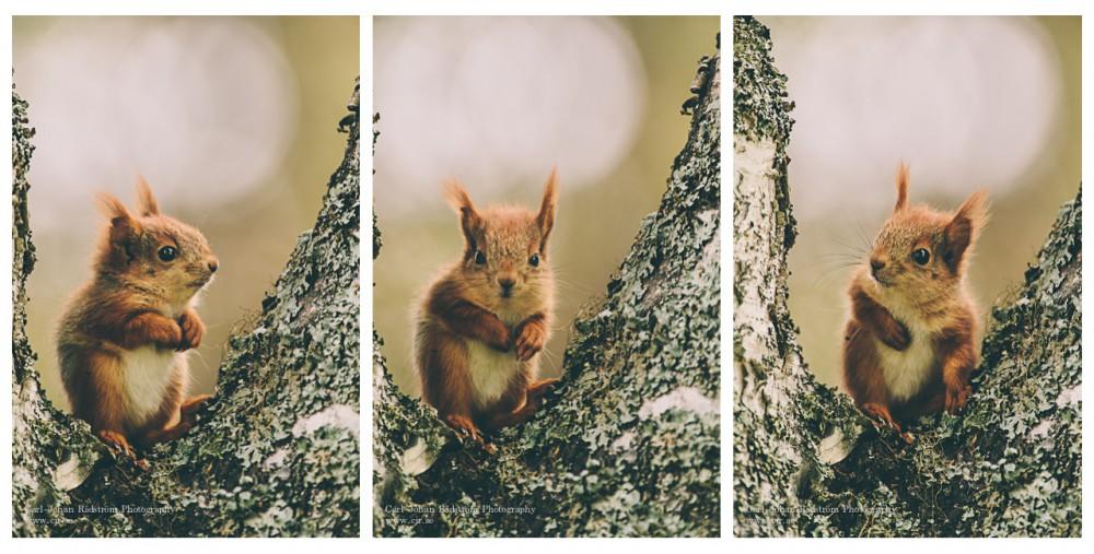 Cute little baby squirrel