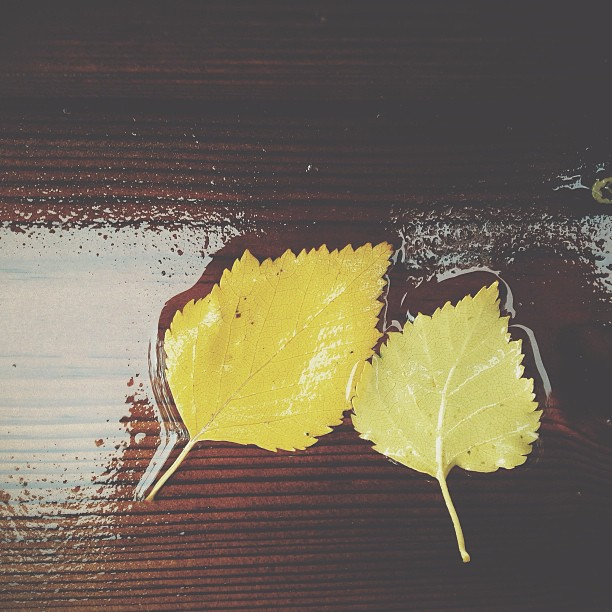It's been raining all day and the leaves are falling, autumn is here! #vscocam #rain #åsele #autumn #leaves