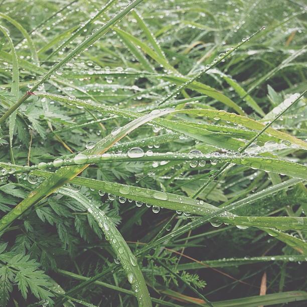 Raindrops #vscocam