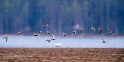 20130510_sorasele_birds_0101