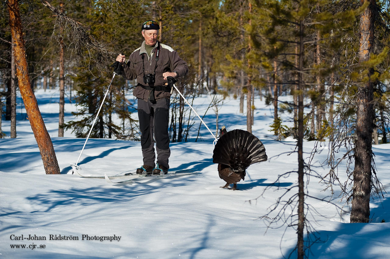 20100412_sorasele_black_grouse_0003