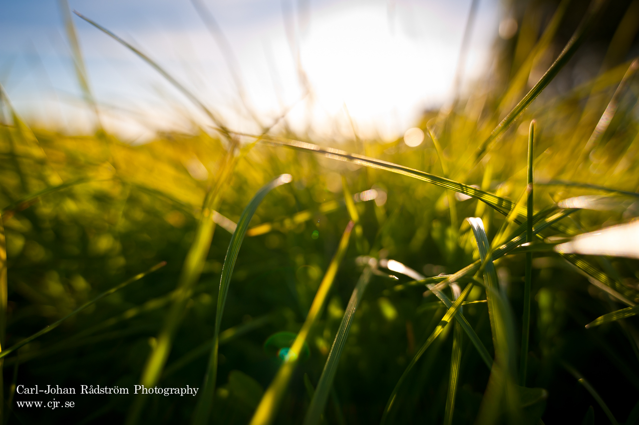 20100610_sorasele_grass_0072