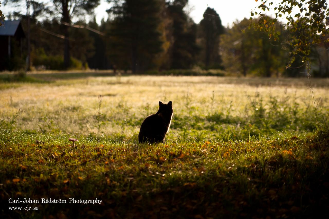 20110918_sorasele_morning_0034