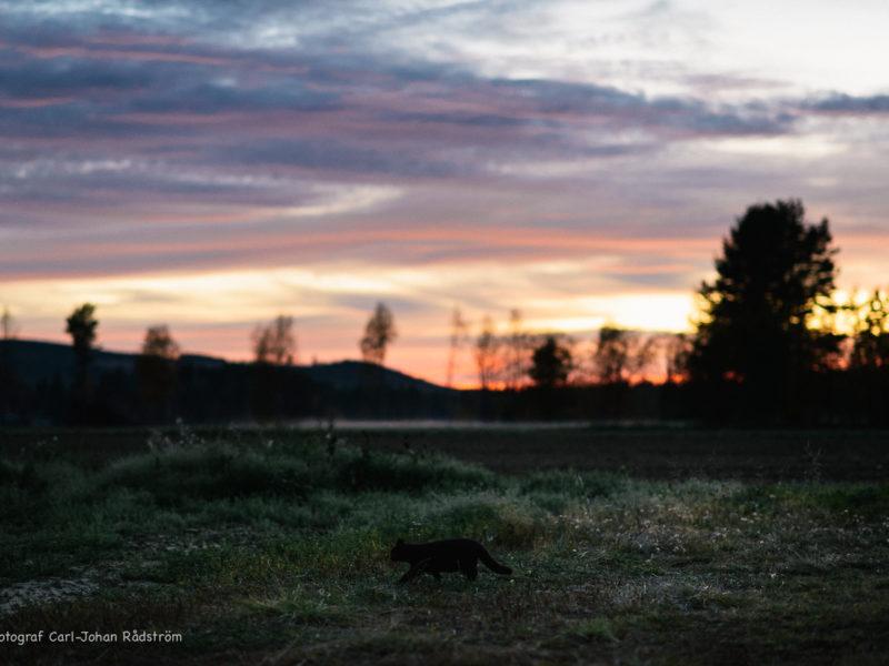 20160925_sorasele_sunset_0044